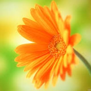 Calendula Herbal Tea - Natural Remedies for your Health