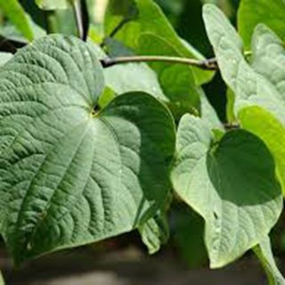 Kava Kava Herbal Tea - Natural Remedies for your Health