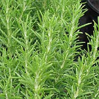 Rosemary Herbal Tea - Natural Remedies for your Health