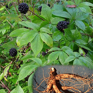 Siberian Ginseng Herbal Tea - Natural Remedies for your Health