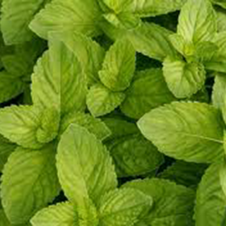 Spearmint Herbal Tea - Natural Remedies for your Health